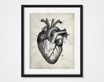 Vintage Anatomy Reproduction Heart Art Print, Human Anatomy 5x7, 8X10, 11x14 Medical Scientific Science Teacher Gift, Doctor Wall Decor