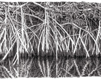 Mangrove art,pen and ink,mangrove reflections,tropical art,Everglade prints,tree drawing,Florida art,walking tree art,original art,Mangroves