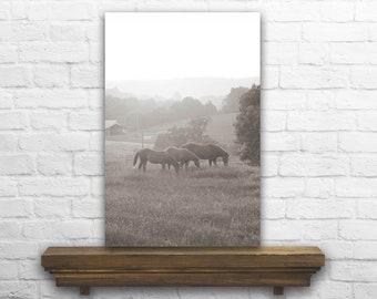 Horse Photography - Horse Photo - Horse Decor - Horse Decoration - Horse Print - Black and White Photo - Farmhouse Home Decor
