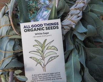 White Sage (Salvia apiana) Seeds (~50): Certified Organic, Non-GMO, Heirloom, Open Pollinated  Seed Packet
