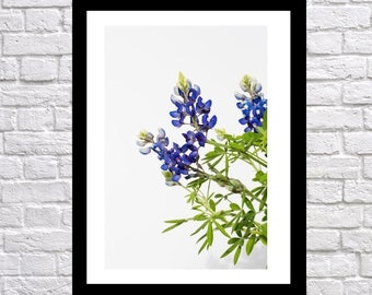 Texas Bluebonnet Flowers vertical, nature photography, landscape photography, Bluebonnet Art, flower print, texas blue bonnet art