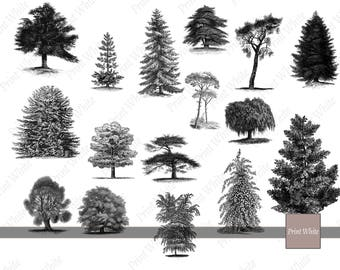 Trees Clipart, Trees PNG, Trees Clip Art, Digital Stamp, Instant Download, Digital File, Oak PNG, Trees Silhouette, Trees Sketch, Nature