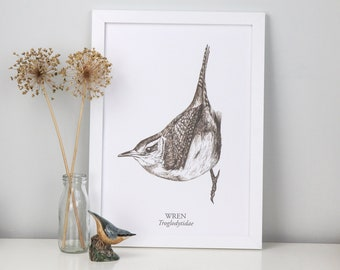 Limited Edition Illustrated Wren Bird, Sepia on White Fine Art Giclée Print