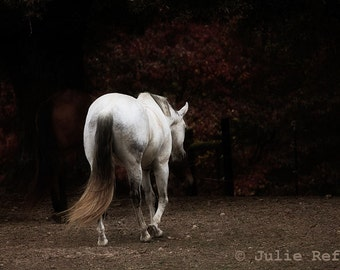 Horse Photography White Horse Equine Art