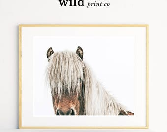 Horse Print, Equestrian Decor, Horse Photography, Icelandic Horse, Large Wall Art, Wall Decor, Girls Room Decor, Horse Art
