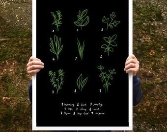 "Botanical Chart Herbs Poster print  20""x27"" - archival fine art giclée print"