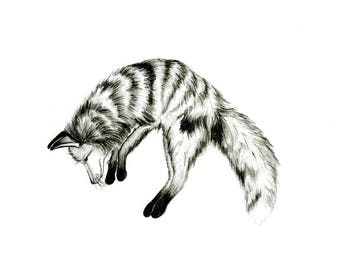 Jumping Fox -- Woodland Animal Print // Pencil Illustration