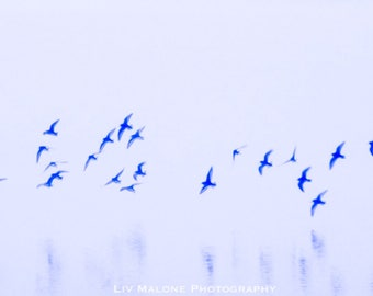 Flight of the Sandpipers