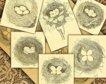 Birds Nests and Eggs Clipart, Vintage Natural History, Printable Download