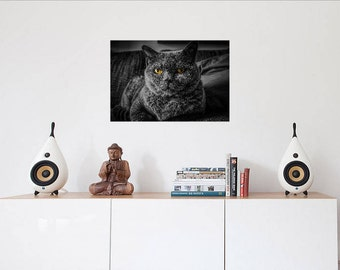 Black/Gray Cat With Yellow Eyes Image Photo paper poster