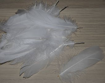 bag of 30 feathers about white color