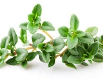 THYME THYMOL, Thymus vulgaris, expectorant, floral water Hydrosol, facial, certified AB and nature & progress France, 100% pure