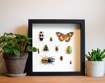 Green Scarab, Stag Beetle, Butterfly, and Beetles framed insect display - real mounted insects in a shadow box frame