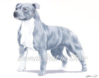 Staffordshire Bull Terrier Dog - Pit Bull - Archival Original Fine Art Print - AKC Best in Show Champion - Breed Standard - Terrier Group