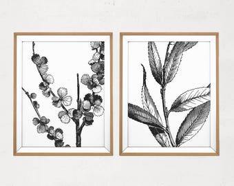 Botanical Print Set, Vintage Leaf Printable, Botanical Art Set of 2, Black and White Vintage Plants, Classic Wall Art, Botanical Wall Art