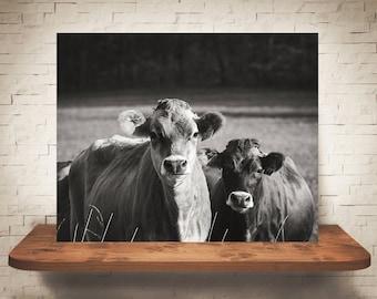Jersey Cow Photograph - Fine Art Print - Black White Photography -  Wall Art - Wall Decor -  Farm Pictures - Farmhouse Decor - Cows