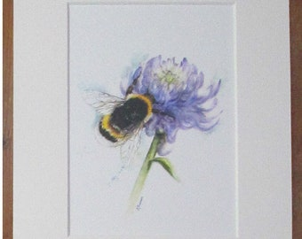 Bee on clover, watercolour print in a 10 x 8 mount, ready to pop into a frame.