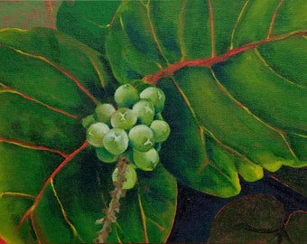 """Sea Grapes I 8""""x10"""" archival print with 11""""x 14"""" double matting in white with black trim."""