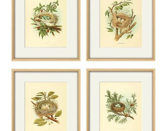 Bird nest art print Vintage Bird art print birds egg art bird nest decor bird wall art Natural History Victorian art print antique prints