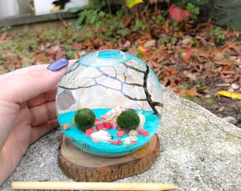 Marimo terrarium in aqua sand sea with bamboo bits of coral, seashells, gifts for her, holidays