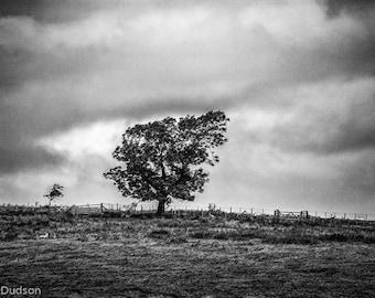Bleak. Black and white photograph evoking mood. Fine art photograph.