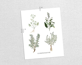 Printable Vintage Aromatic Herbs Parsley Sage Rosemary Thyme Nature Art