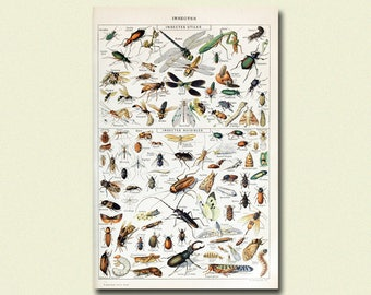 Vintage Larousse Print 1909 - Adolphe Millot Poster Insect Poster Home Decorating Larousse Illustrations Vintage Instects Print