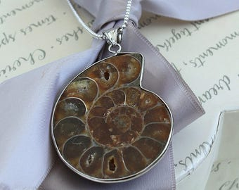 "Ammonite fossil necklaces with 18"" or 20"" Sterling Silver chain Genuine fossil"