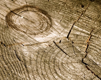 Tree Rings wall fine art print wood grain nature rustic home decor woodland wood forest nature photography wall decor brown wood wall art