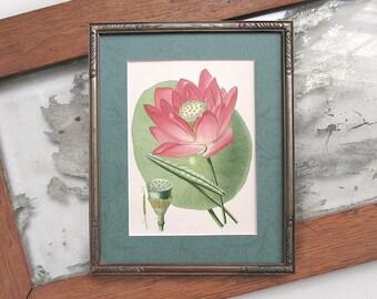 Artisan Framed Original c. 1896 E. Step Antique Chromolithograph; Botanical, Lotus Flower. Framed Art. Naturalist Decor. Home Decor.