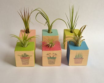 NEW  Large Air Planter Cube, Air Plant Holder. Air Plant Container, Planter, Mother's Day, Springtime