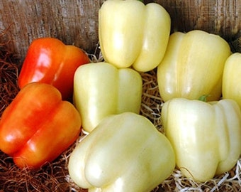 Sweet Pepper- White Cloud- 25 seeds