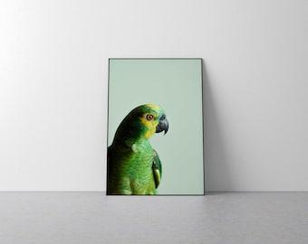 Parrot print, parrot photography, parrot art, parakeet print, parakeet photography, parakeet art print, tropical bird wall art, parrot photo