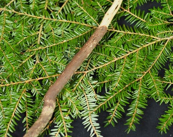 Rare Cornish Heather Wood Wand - For Love, Hearth and Home - Wicca, wWitchcraft, Pagan, Ritual, Magic