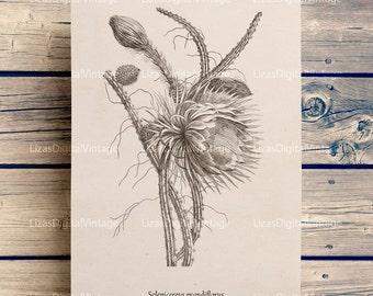 Print art, Botanical art, Cactus print, Cactus clip art, Printable botanical art, Cactus, Wall art printable, Cactus art, PNG JPG 300dpi