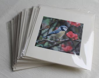 Individual Greeting Cards or Note-lets - Bees, Birds, Flowers, Hedgerow and Cupcake