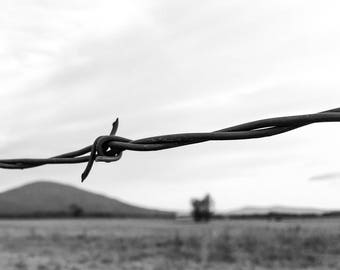 Barbed Wire in Black and White, Sugarloaf Mountain