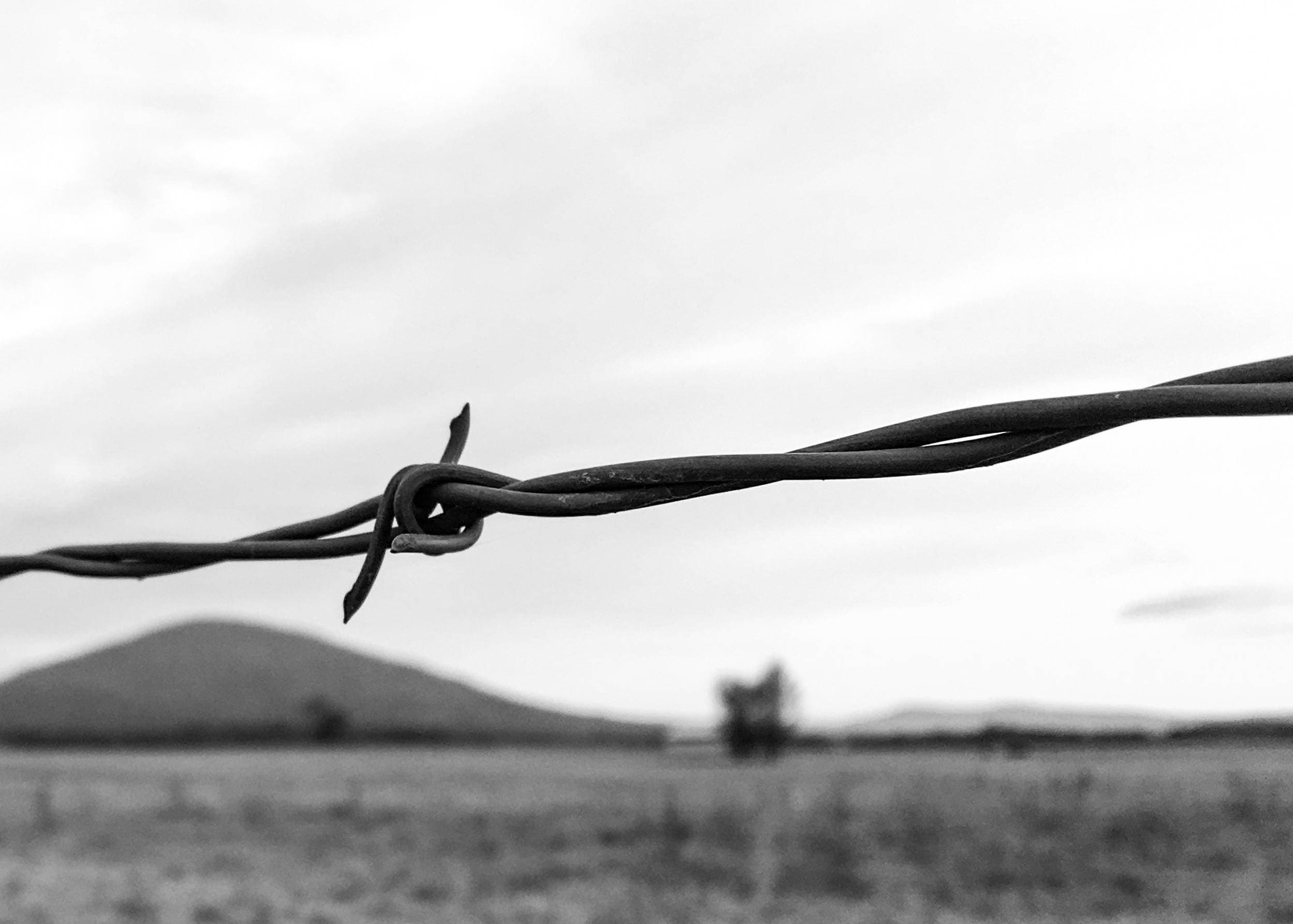 Barbed Wire in Black and White Sugarloaf Mountain