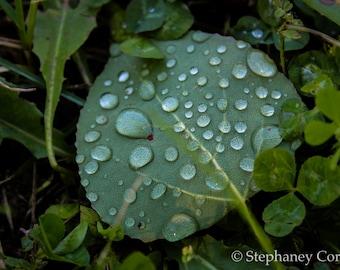 Dew Drop Leaf Print, Nature Print, Nature Photography,