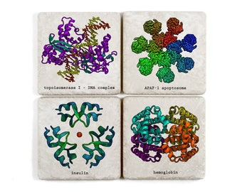 Protein Structure, Ceramic Science Coasters, Biochemistry, Proteomics Gift, Molecular Biology