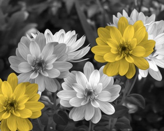 Black White Yellow Wall Decor Yellow Flowers Pop Of Color