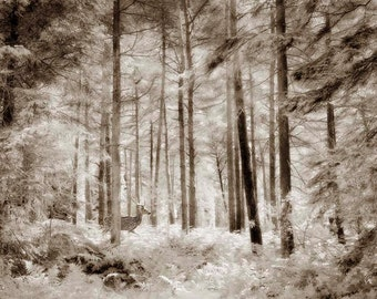 Nature Photography, Deer, Hart, Stag, Forest, Woodland, Sepia, Ethereal, Enchanted.