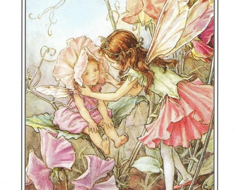 Sweet Pea Fairies Fairy Cicely Mary Barker Flower Fairies Vintage Print 1995 Wall Art Nursery Decor Fairy Print Home Decor Print Fine Art