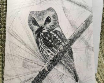 Saw Whet Owl Card