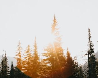 Sun Flare Tree Photo Print