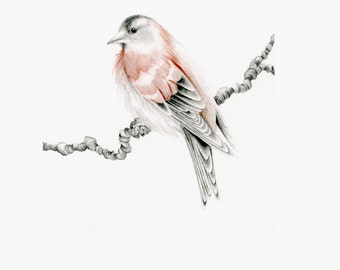 Bird Art Print Bird Home Decor Drawing of a Bird Art Print of My Original Bird Pencil Drawing Illustration Gift for Nature Lovers Bird Lover
