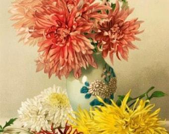 Chrysanthemums - Cross stitch pattern pdf format