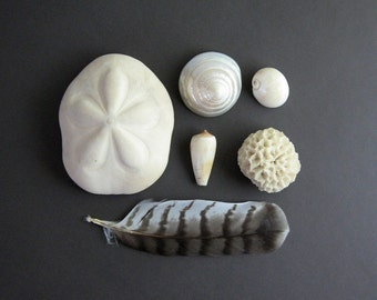 Vintage Sea Shell Collection - Shell Specimens - Beach House Decor - Natural Home Decor - Cabinet of Curiosities Found Art Objects Sculpture