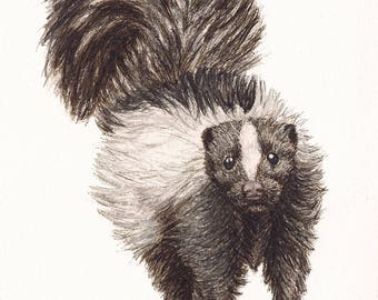 "Skunk - Print of Original Art 5"" x 7"" watercolor and ink Giclee archival"