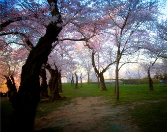 Flower Photo, Soft Focus, Cherry Blossom Photograph, Washington DC, Trees, Monument, Pink, Dreamy, Fine Art Photography- Lovely Blossoms